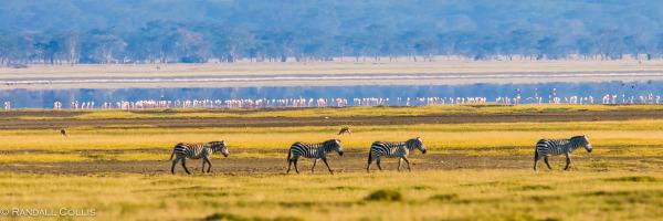 Kenya Maasai Mara Africa-22